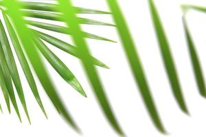 Blades of palm leaves