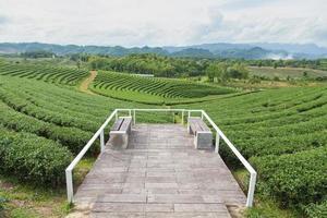 Viewpoint at the tea farm