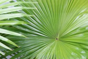 Tropical vibrant leaves photo