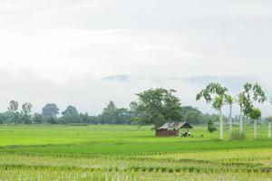 Cabin on the rice fields in Thailand