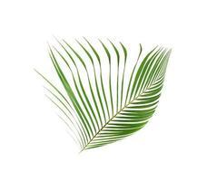 Tropical green coconut leaf