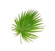 exuberante follaje tropical verde