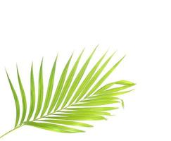Bright palm leaf with copy space