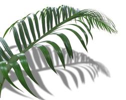 Tropical leaf and shadow photo
