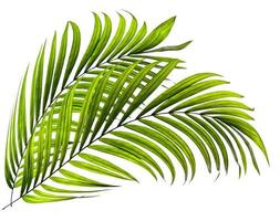 Two green tropical plant leaves photo