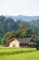 casa en los campos de arroz en tailandia foto