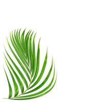 Curved green plant leaf photo