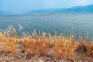 flores de pasto en el lago foto