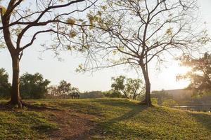 césped y árboles