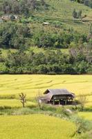 House on the rice fields in Thailand photo