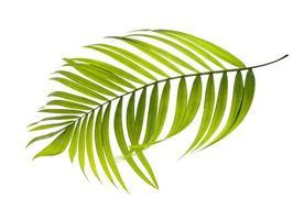 Flat lay of a tropical leaf photo