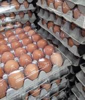 cajas de huevos foto