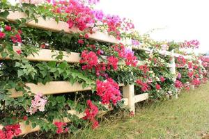Flowers on wooden fence photo