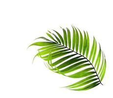 hoja de palmera tropical curva
