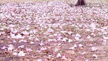 Fallen petals on green grass photo