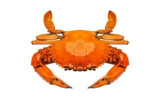 Crab on white