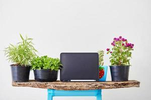 Tablet mock-up with plants photo