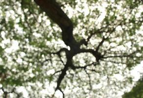 fondo de árbol borroso foto