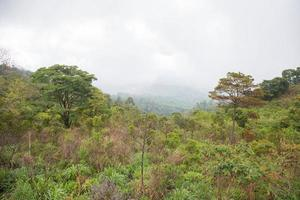 Forest in Thailand photo