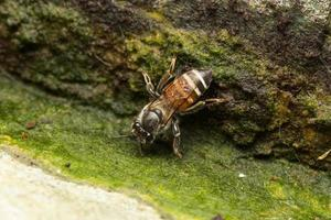 Bee on a stone