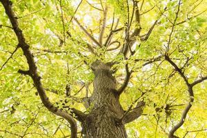 Tree in autumn photo
