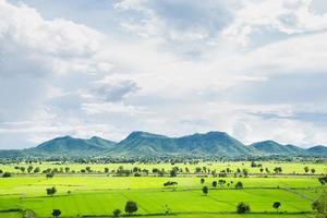 Rice fields in Thailand photo