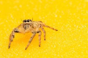 araña sobre un fondo amarillo