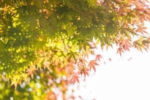 hojas en el arbol foto