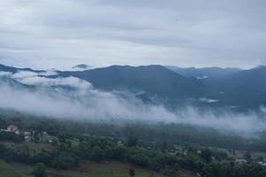 niebla sobre el bosque