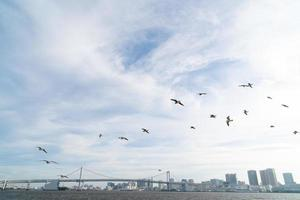 pájaros en el puente del arco iris en tokio