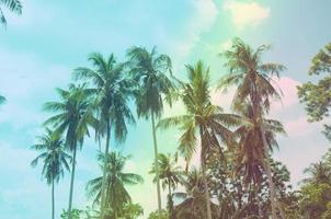 cocoteros con cielo azul