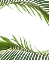Frame of tropical green leaves photo