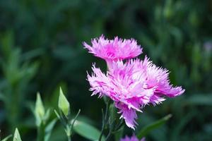 flores violetas en el parque