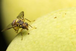 Small insect close-up