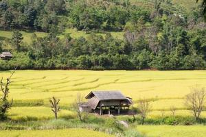 House in the rice fields in Thailand photo