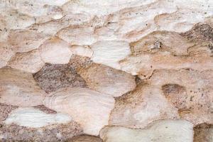 fondo de madera marrón foto
