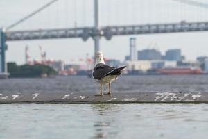pájaro en el puente del arco iris en tokio