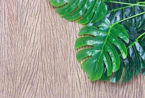 Tropical leaves wood photo