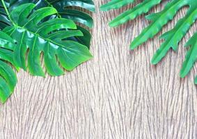 Vibrant green leaves on wood photo