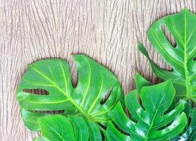Green leaves on wood photo