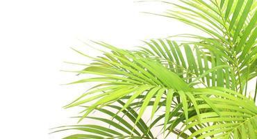 Vibrant bright green palm leaves photo