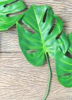Monstera leaves on wood photo