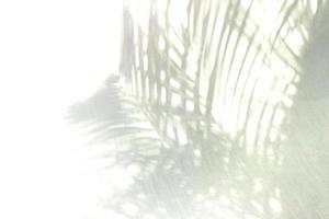 Palm leaf shadows