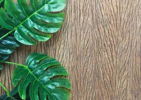 Shiny green leaves on wood photo