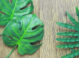 Green philodendron and monstera leaves photo