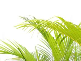Bright green palm leaves with shadows