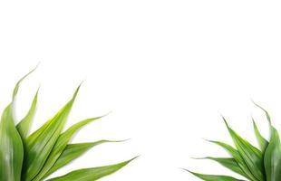 hojas verdes naturales con espacio de copia foto