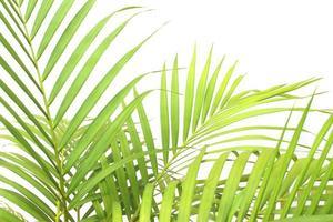 grupo de hojas tropicales en blanco foto