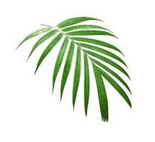 Coconut leaf cutting