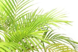 grupo de hojas verdes vibrantes foto